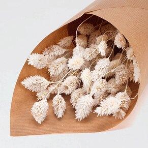 phalaris-gebleicht-trockenblumen-zur-kommunion-oder-konfirmation-TA482-210-07-1